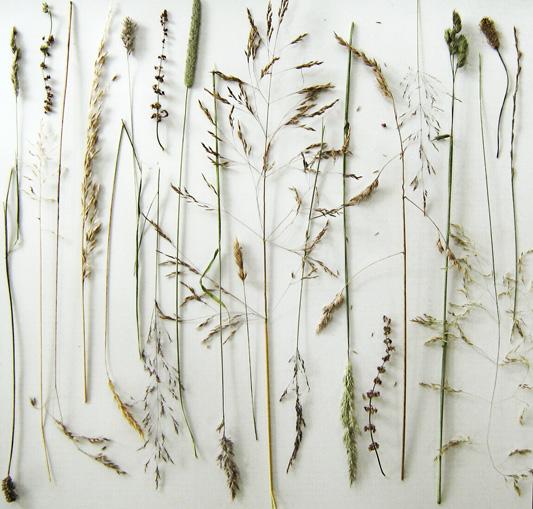 Grasseso2nweb