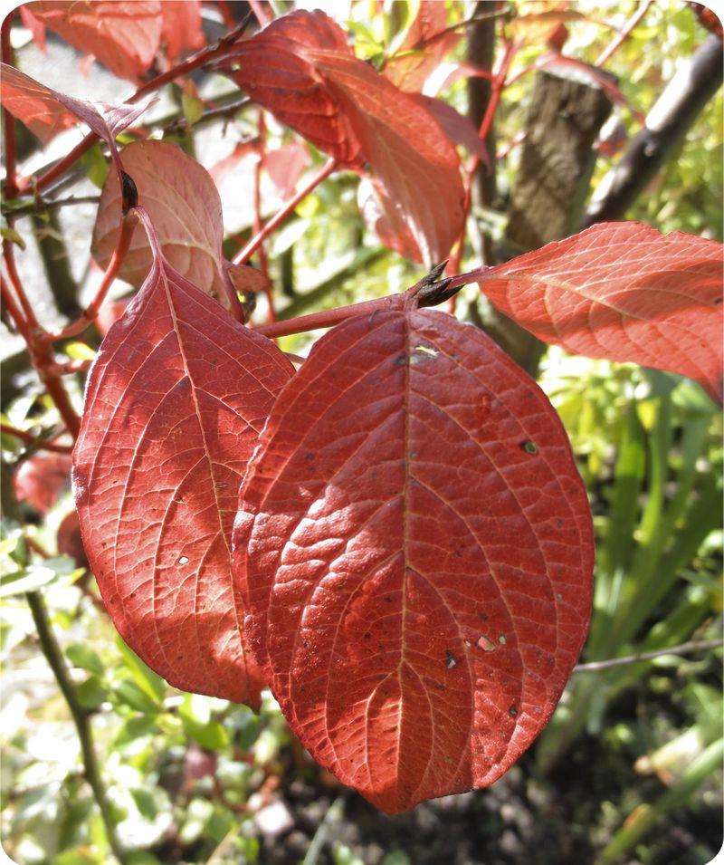 Leafroundedcorner