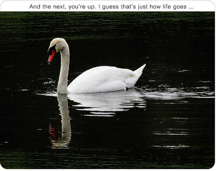 Swanupweb01