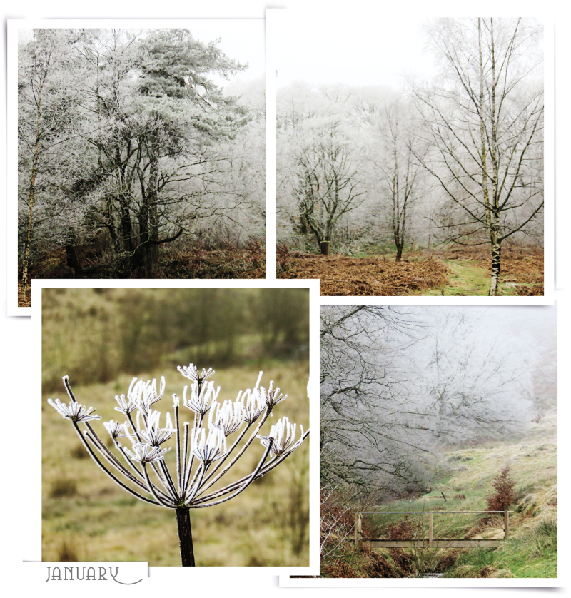 Januaryfrostweb