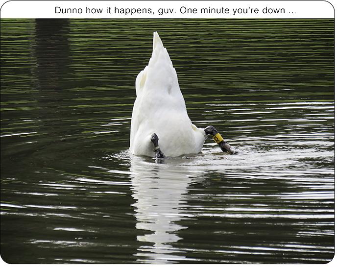 Swandownweb01