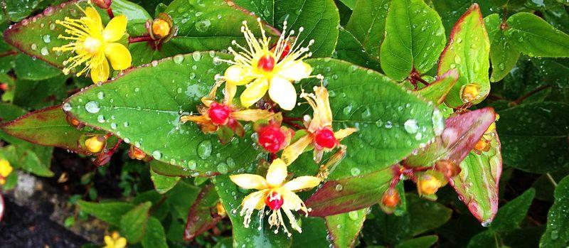 Flowersrainweb